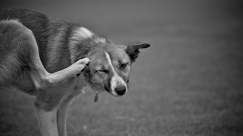What To Put On Dogs Skin To Stop Itching