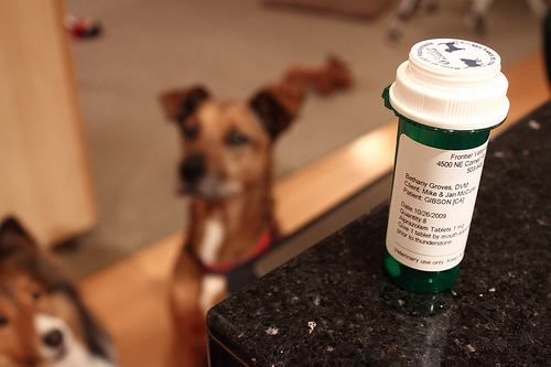 Ragweed Allergy In Dogs When The Itching Won T Stop