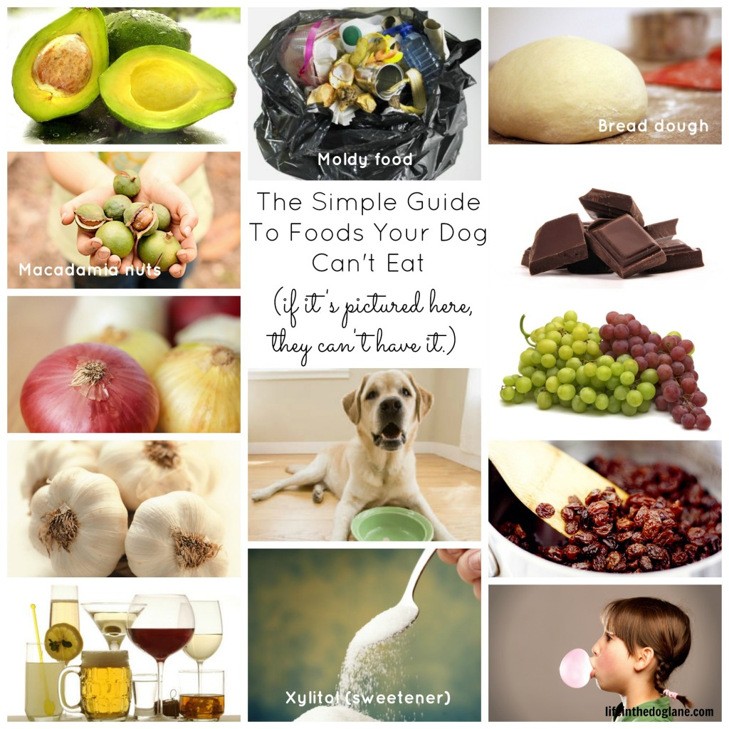 Things dogs/puppies eat... need re-assurance!