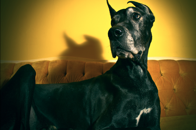 Life In The Dog Lane » The 10 Best Dogs For Apartment Living